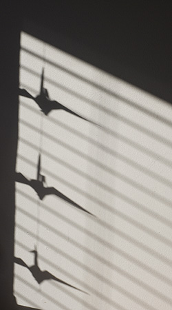 Crane_shadows
